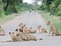 Tham quan cuộc sống hoang dã tại công viên Kruger