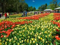Đặt vé máy bay Úc khứ hồi đến với lễ hội hoa Úc
