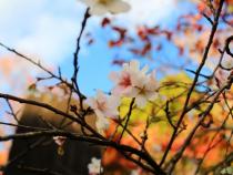 Các trải nghiệm nên thử một lần khi du lịch Nhật Bản