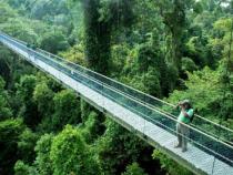 Tham quan đường mòn xanh MacRitchie tự nhiên ở Singapore