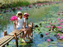 Ngất ngây trước vẻ đẹp của hoa súng chùa Hương tại Hà Nội