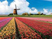 Ngắm nhìn hoa tulip tuyệt đẹp tại nước Úc